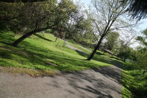 birch-tree-walking-path